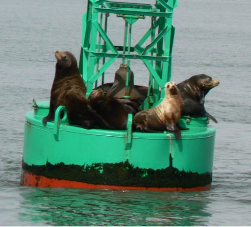 Seal Sendoff