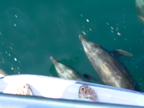 Dolphins in our Bow Wake